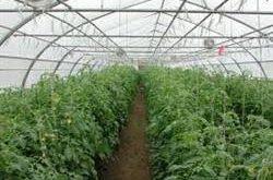 خریدار بشکه اسید نیتریک کشاورزی