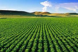 قیمت خرید هر تن اسید نیتریک کشاورزی