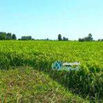 خرید فروش فله اسید نیتریک کشاورزی