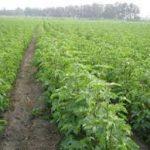 فروش بهترین اسید نیتریک کشاورزی