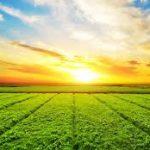 قیمت فروش اسید نیتریک صنعتی کشاورزی